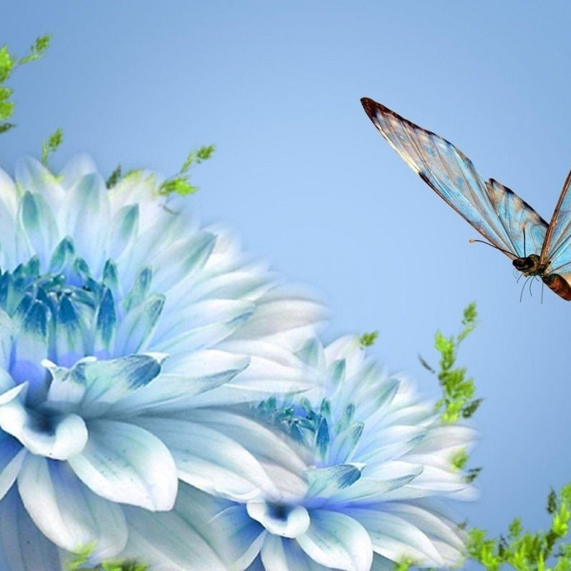 10 Top Butterfly With Flowers Wallpapers FULL HD 1920×1080 For PC Desktop 2018 free download butterfly and flower wallpapers wallpaper cave 800x800