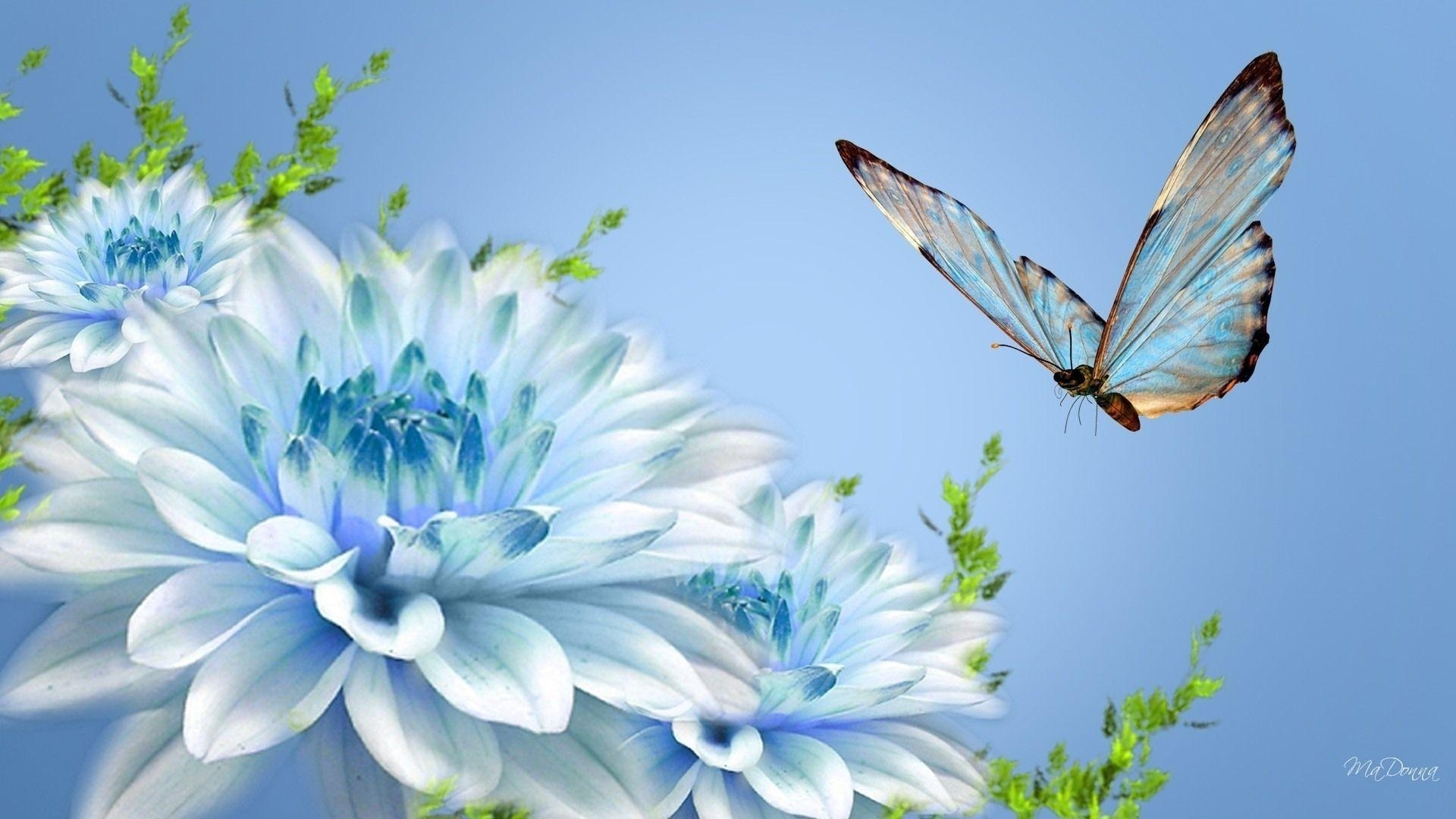 10 Top Butterfly With Flowers Wallpapers FULL HD 1920×1080 For PC Desktop