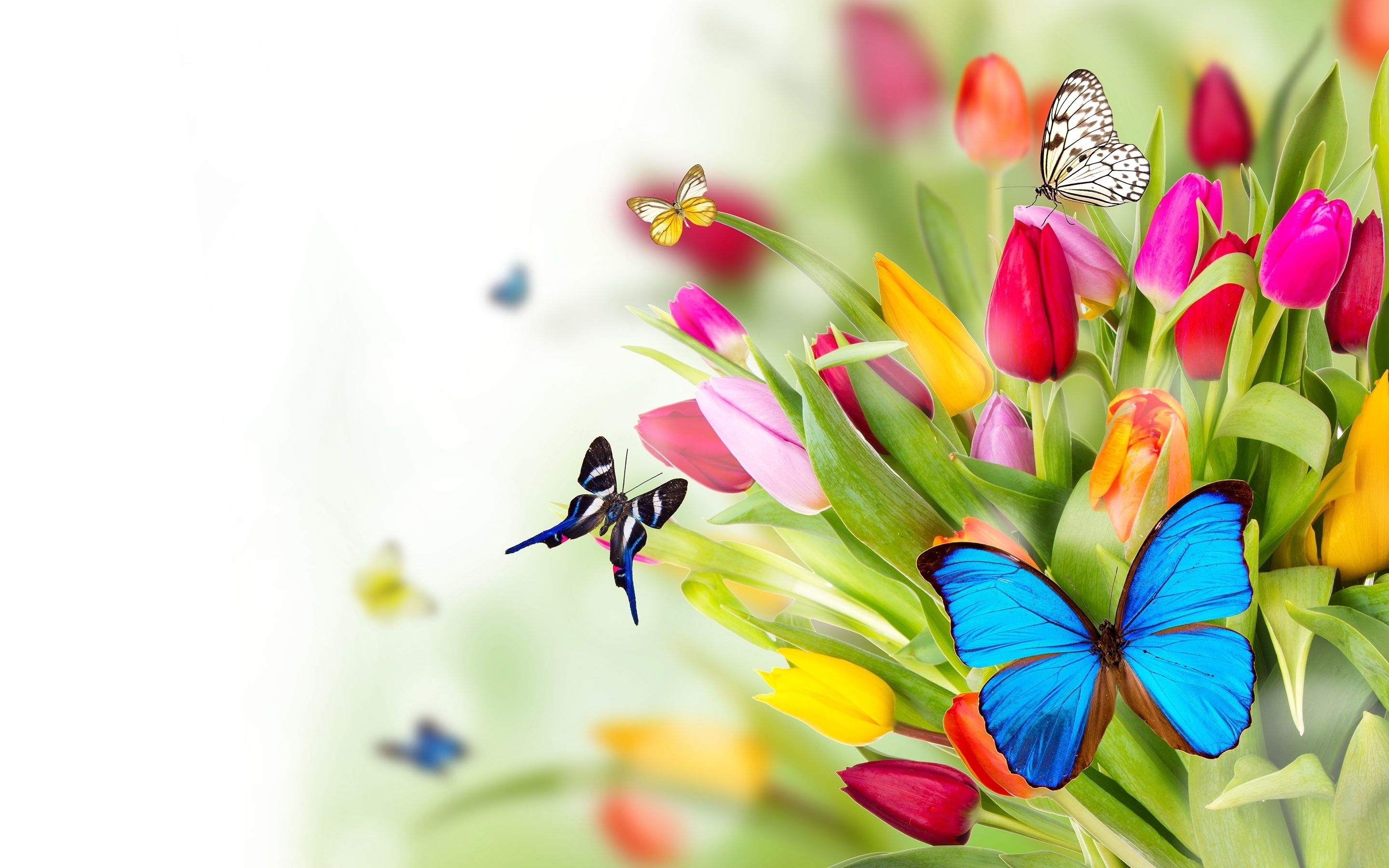 butterfly backgrounds | flowers butterflies wallpapers pictures