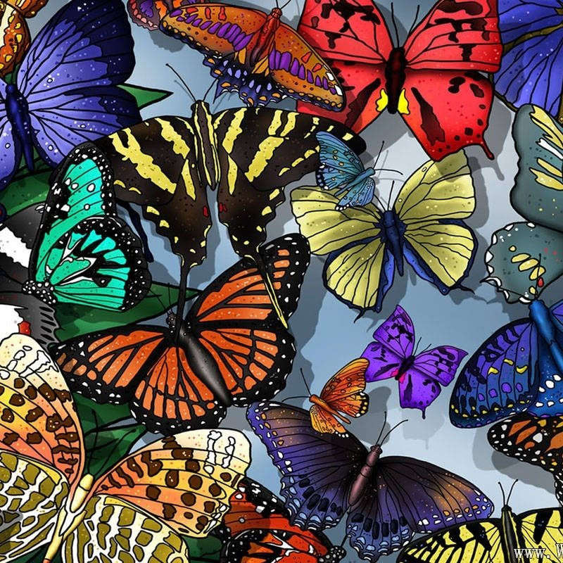 10 Best Wallpaper Butterfly Free Download FULL HD 1920×1080 For PC Desktop 2018 free download butterfly wallpapers free download 800x800