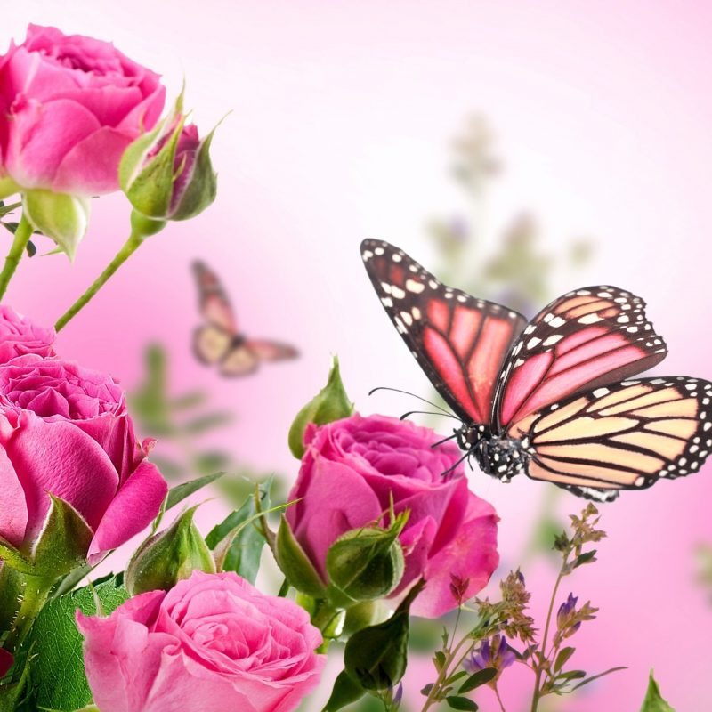 10 Latest Flowers With Butterfly Wallpaper Hd FULL HD 1080p For PC Desktop 2018 free download butterfly with flowers wallpapers al097b media file pixelstalk 1 800x800