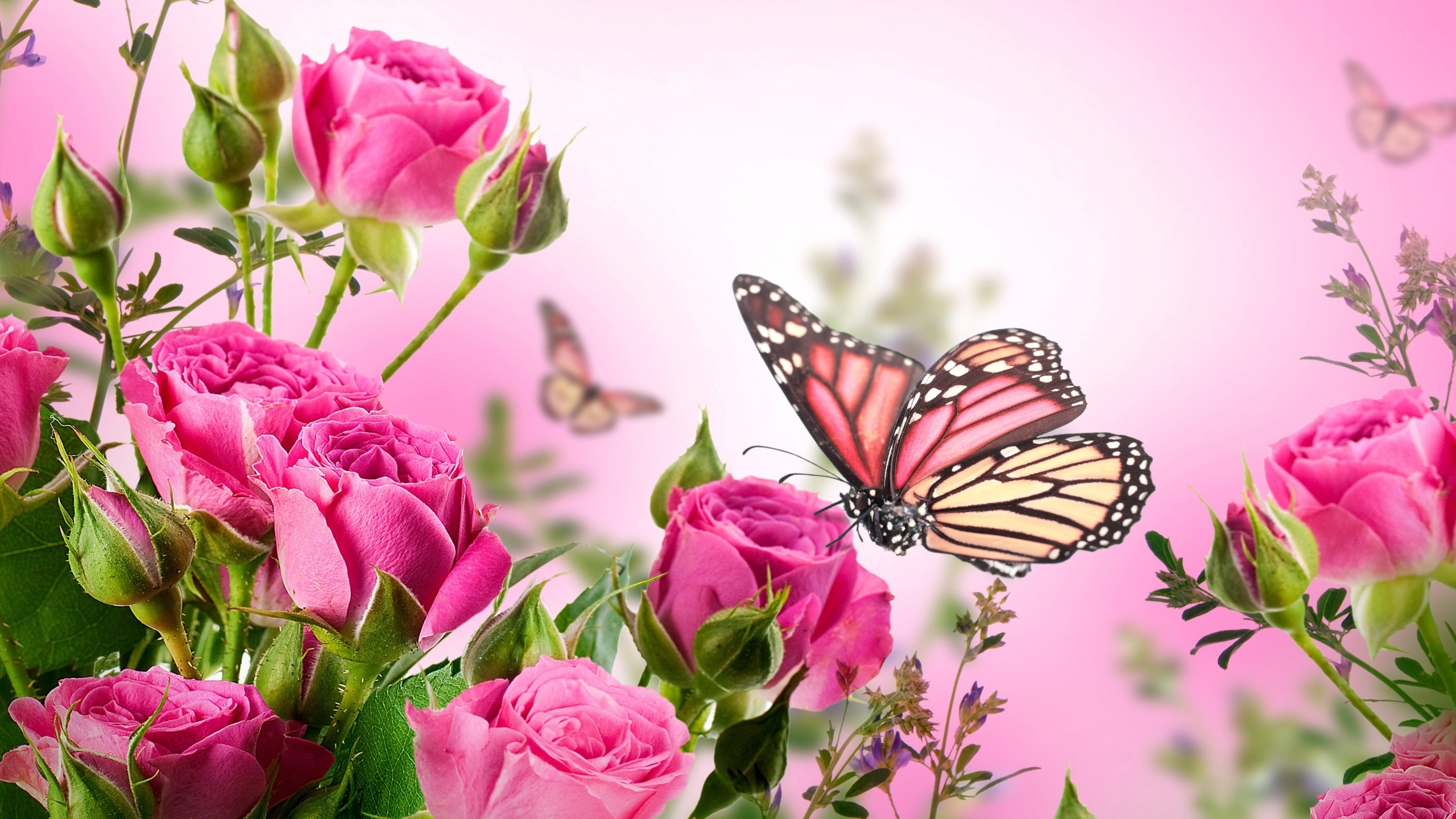 butterfly with flowers wallpapers al097b - media file | pixelstalk