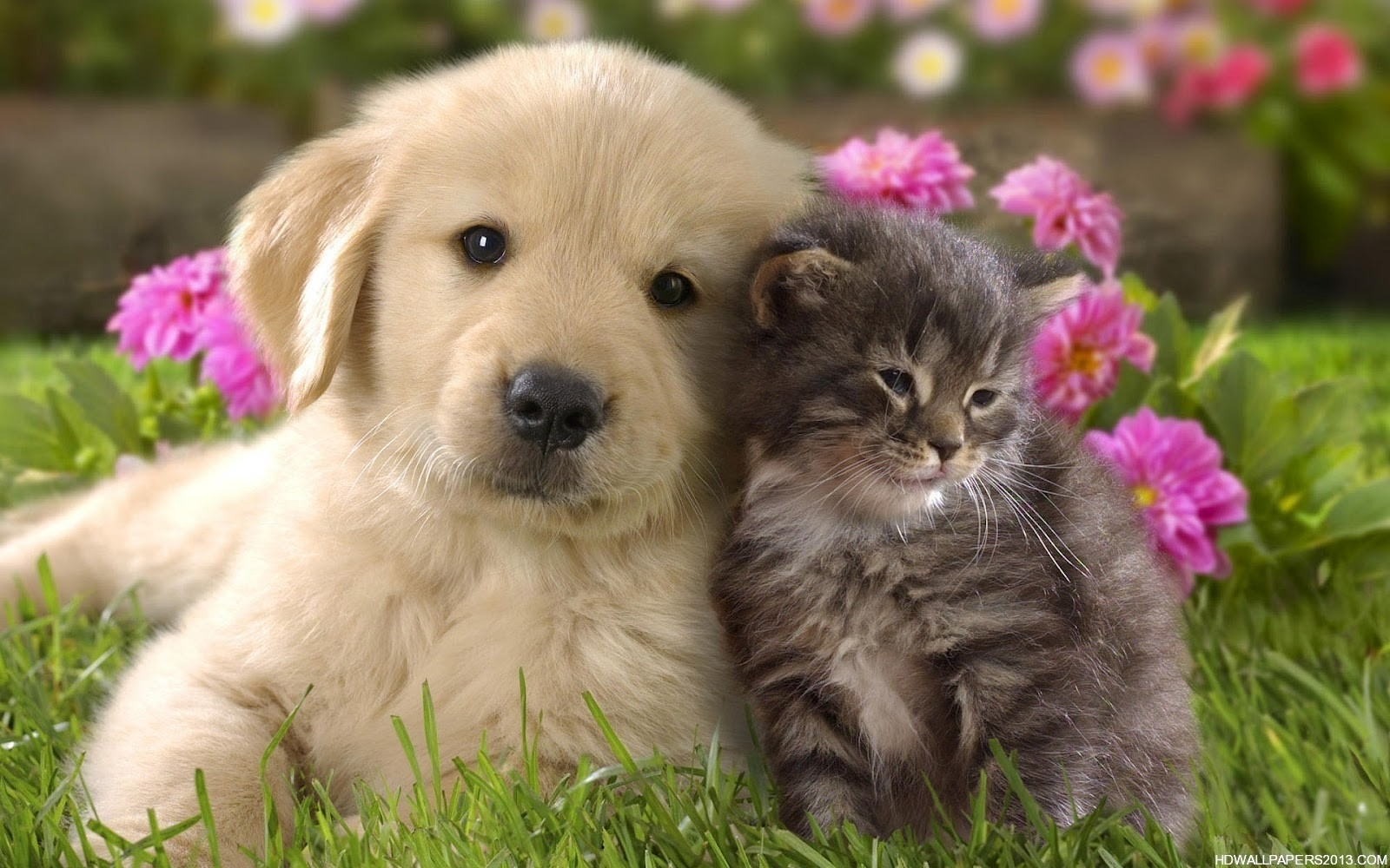 10 Most Popular Cat And Dog Wallpaper FULL HD 1080p For PC Background