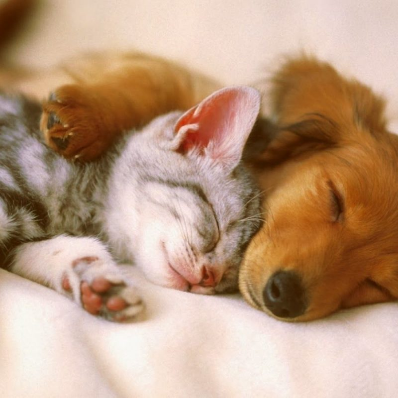 10 Top Cats And Dog Wallpapers FULL HD 1920×1080 For PC Desktop 2020 free download cats and dogs wallpaper hd wallpapers pinterest dog wallpaper 800x800