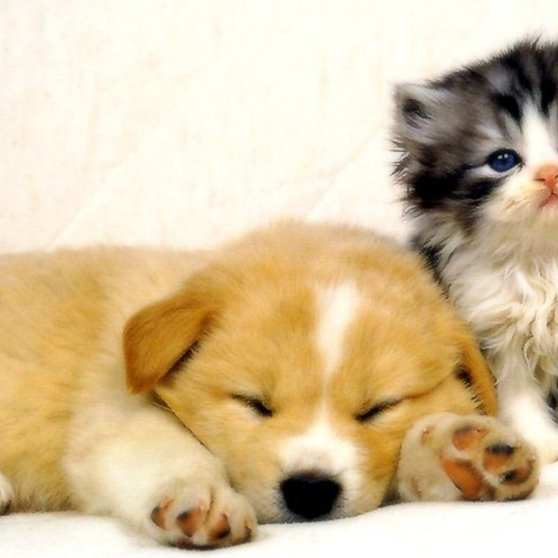 10 Top Cats And Dog Wallpapers FULL HD 1920×1080 For PC Desktop 2020 free download cats and dogs wallpapers animals library 1 800x800