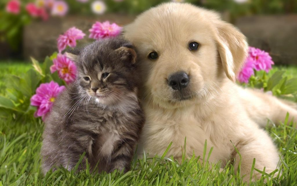 10 New Dog And Cat Backgrounds FULL HD 1920×1080 For PC Background 2020 free download cats and dogs wallpapers animals library 1024x640