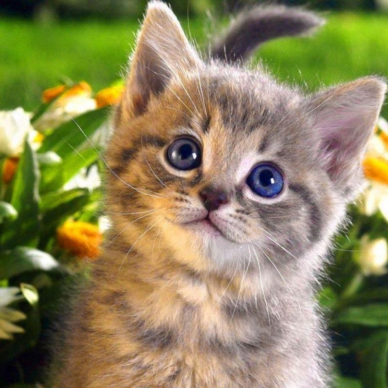 10 Top Cat Wallpapers Free Download FULL HD 1920×1080 For PC Desktop 2018 free download cats wallpapers wallpaper cave 800x800