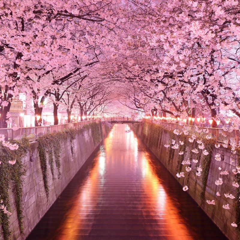 10 Best Cherry Blossom Desktop Backgrounds FULL HD 1920×1080 For PC Desktop 2018 free download cherry blossom desktop wallpaper c2b7e291a0 2 800x800