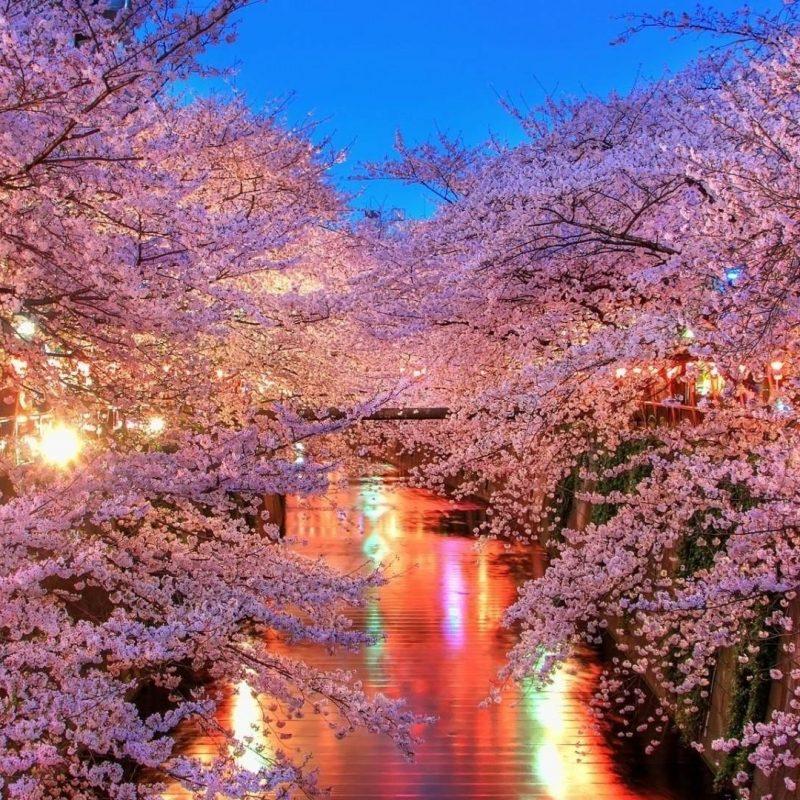 10 Best Cherry Blossom Desktop Backgrounds FULL HD 1920×1080 For PC Desktop 2018 free download cherry blossom desktop wallpapers wallpaper cave 4 800x800