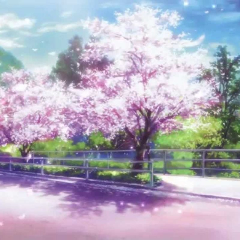 10 Most Popular Anime Cherry Blossom Wallpaper FULL HD 1080p For PC Background 2018 free download cherry blossoms animated wallpaper http www desktopanimated 1 800x800