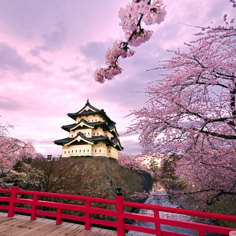 10 New Japanese Cherry Blossoms Wallpaper FULL HD 1080p For PC Desktop 2018 free download cherry blossoms japan e29da4 4k hd desktop wallpaper for 4k ultra hd tv 1 800x800