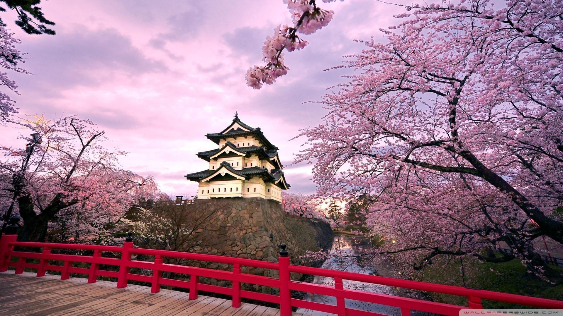 cherry blossoms, japan ❤ 4k hd desktop wallpaper for 4k ultra hd tv