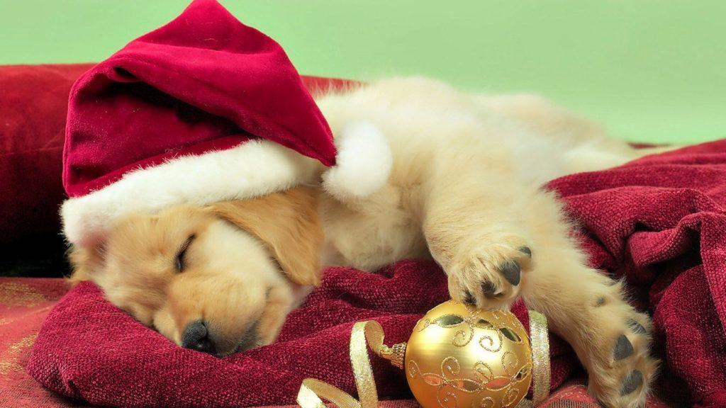 10 New Cute Animal Christmas Wallpaper FULL HD 1080p For PC Desktop 2020 free download christmas cute puppy golden retriever wallpaper 1024x576
