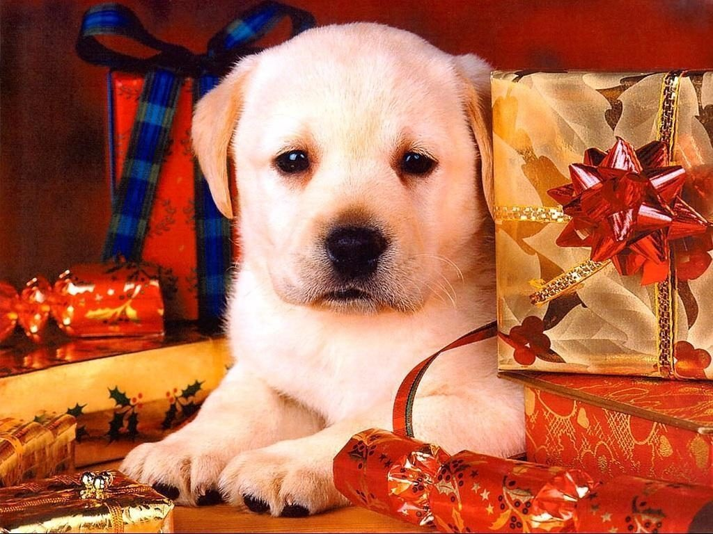 10 New Cute Animal Christmas Wallpaper FULL HD 1080p For PC Desktop 2020 free download christmas dog wallpapers wallpaper cave 1024x768