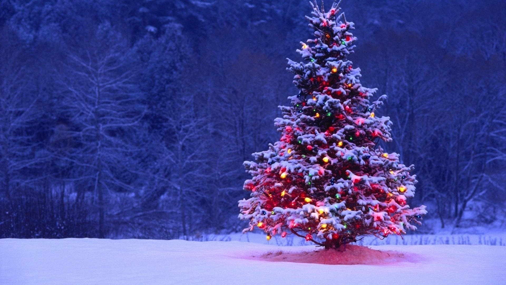 10 Latest Christmas Tree Wall Paper FULL HD 1080p For PC Background
