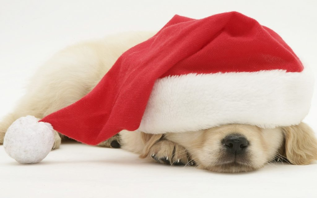10 New Cute Animal Christmas Wallpaper FULL HD 1080p For PC Desktop 2020 free download christmas puppy sleeping in a santa hat work material 1024x640