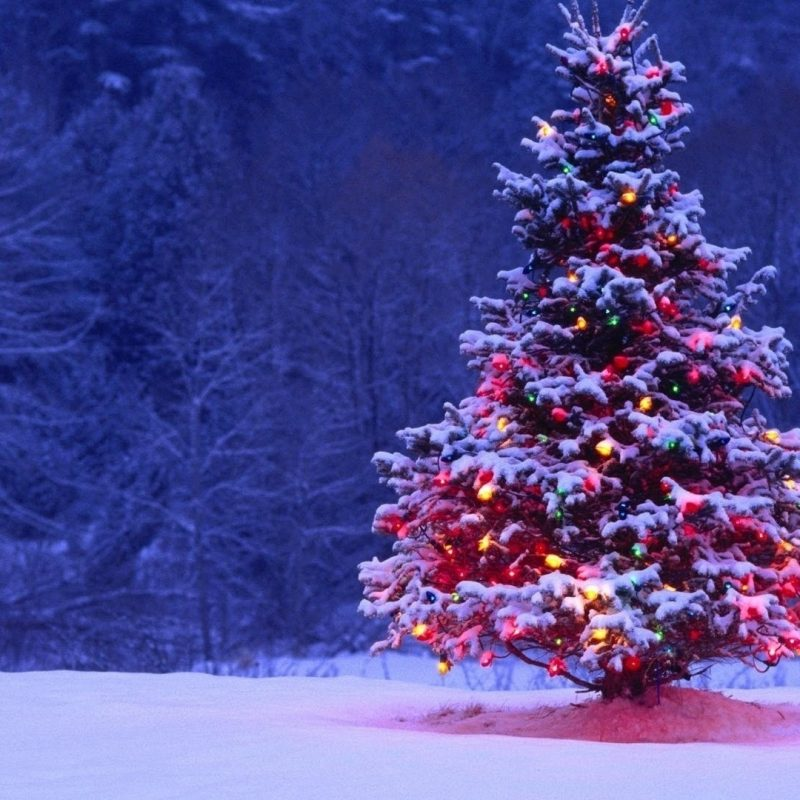 10 New Hd Wallpaper 1920X1080 Christmas FULL HD 1920×1080 For PC Background 2018 free download christmas tree full with lights and snow hd wallpaper 800x800