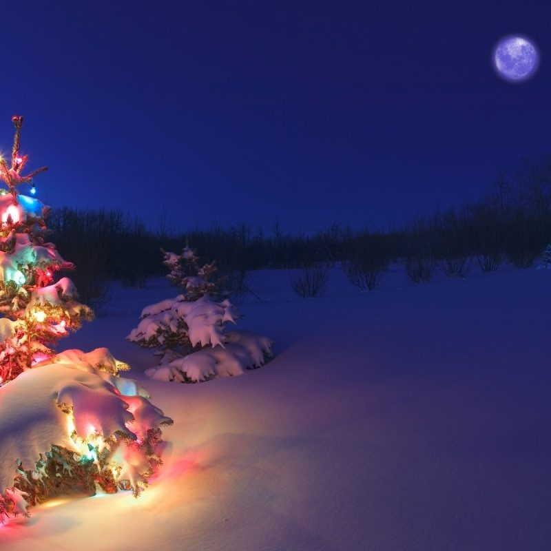 10 Best Christmas Tree Snow Wallpaper Hd FULL HD 1920×1080 For PC Background 2021 free download christmas tree lights snow wallpaper hd wallpaper wiki 800x800