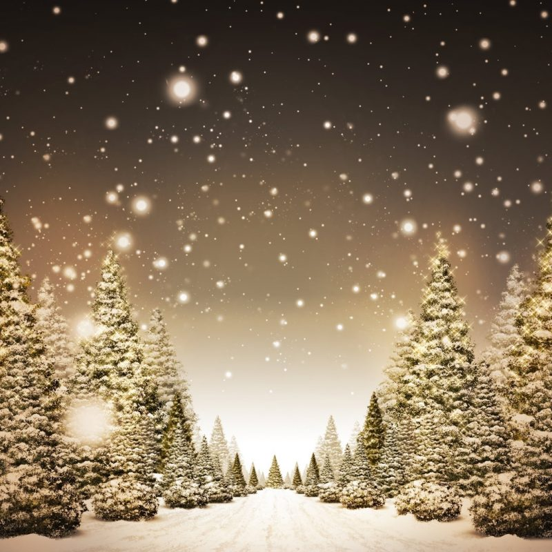 10 Best Christmas Tree Snow Wallpaper Hd FULL HD 1920×1080 For PC Background 2021 free download christmas trees in snow hd wallpaper fullhdwpp full hd 800x800