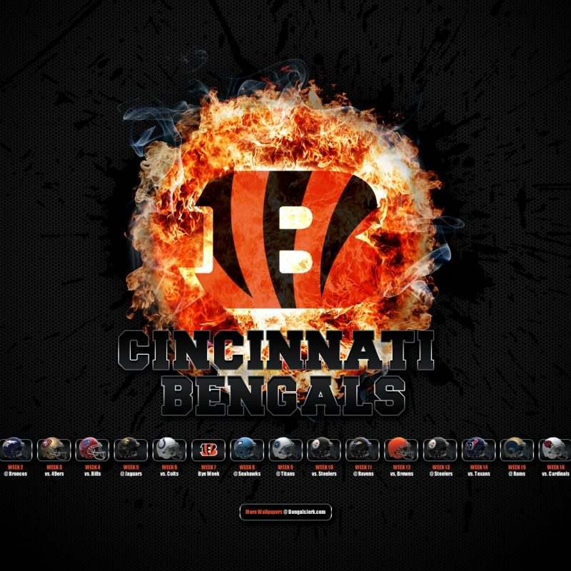 10 Most Popular Cincinnati Bengals Screen Savers FULL HD 1080p For PC Background 2018 free download cincinnati bengals wallpaper and screensavers 77 images 800x800