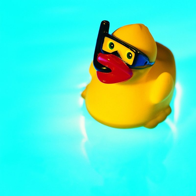 10 Top Rubber Duck Wall Paper FULL HD 1080p For PC Background 2018 free download classy rubber duck hd desktop wallpaper instagram photo background 800x800