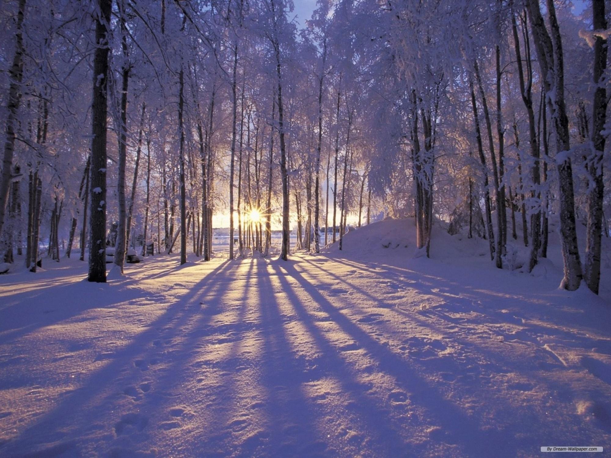 college winter wonderland