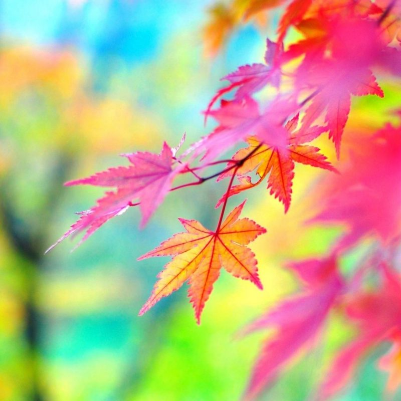 10 Top Colorful Nature Wallpaper Hd FULL HD 1920×1080 For PC Background 2021 free download colorful nature wallpaper epic car wallpapers pinterest nature 800x800