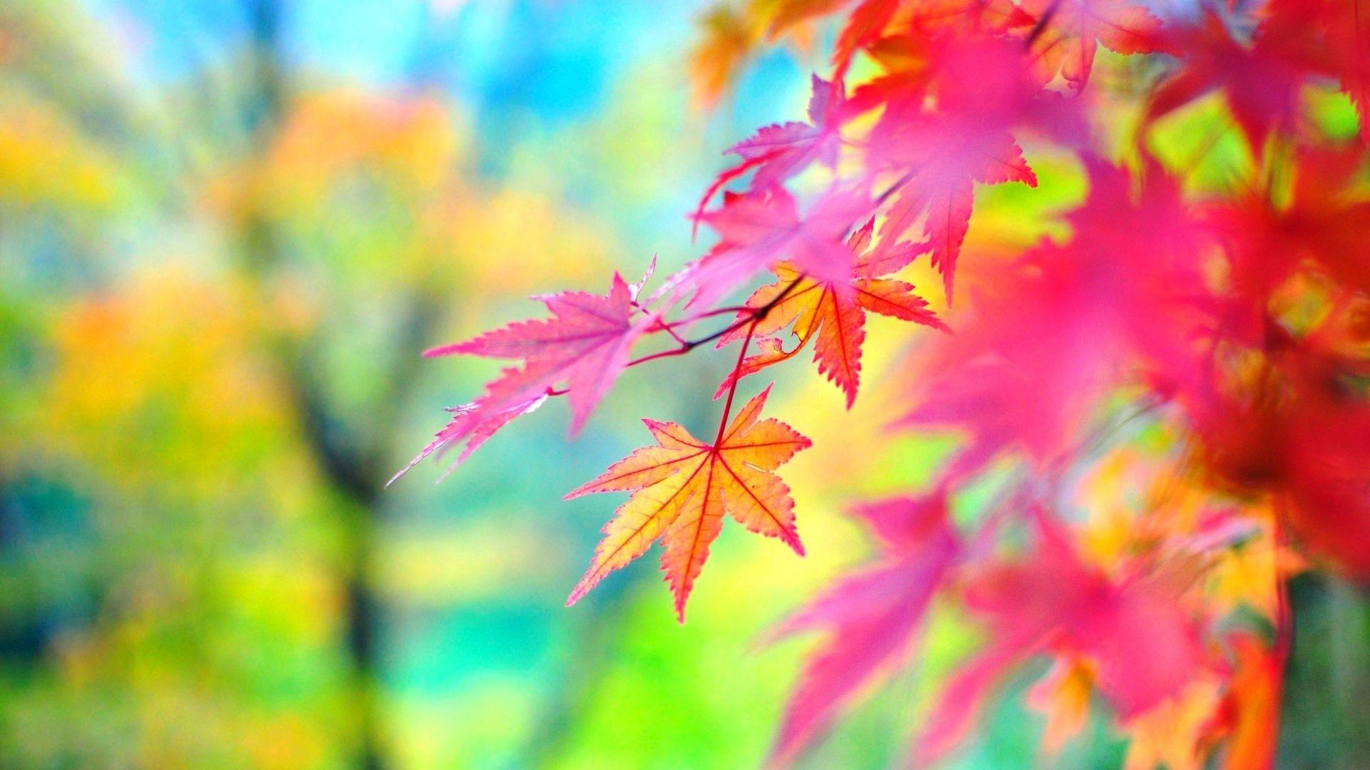 colorful nature wallpaper | epic car wallpapers | pinterest | nature
