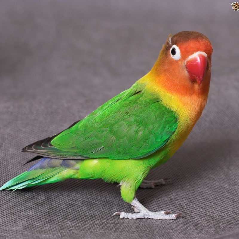 10 Latest Images Of Love Bird FULL HD 1080p For PC Background 2020 free download common lovebird illnesses pets4homes 800x800