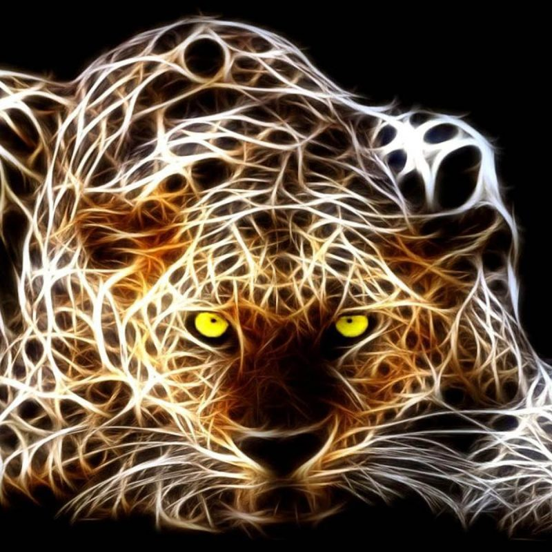 10 Latest Cool Pics Of Tigers FULL HD 1080p For PC Desktop 2020 free download cool 3d backgrounds of tigers tag tiger 3d wallpapers images 800x800