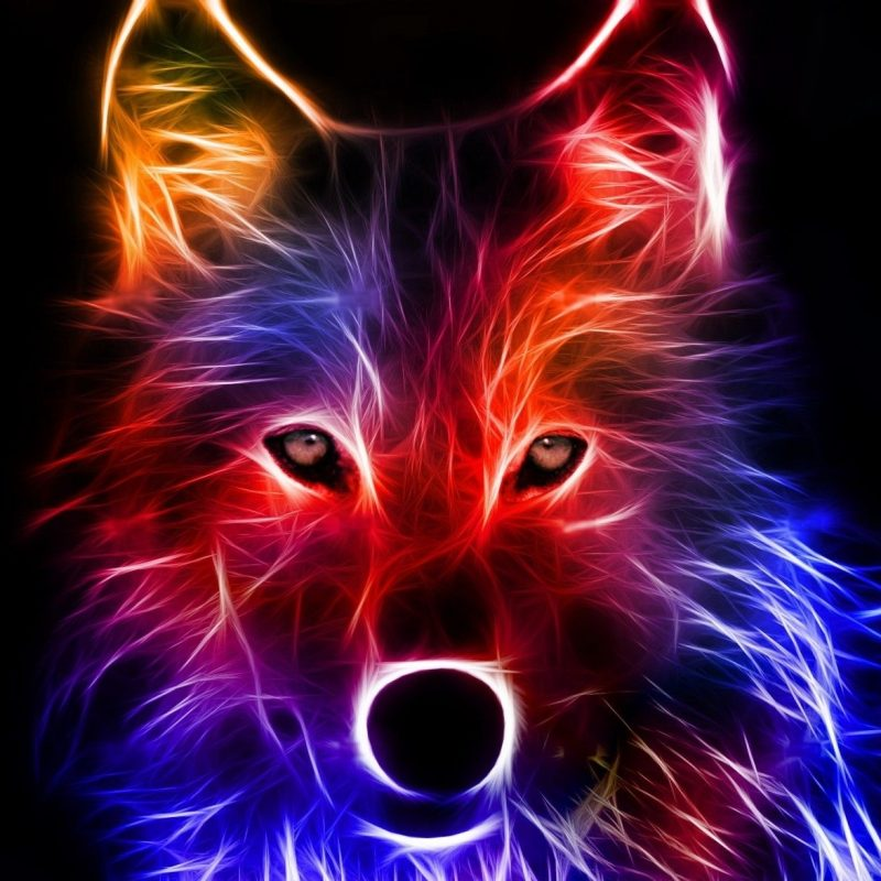 10 Most Popular Cool Pictures Of Wolfs FULL HD 1080p For PC Desktop 2018 free download cool backgrounds best wallpaper background pinteres 800x800