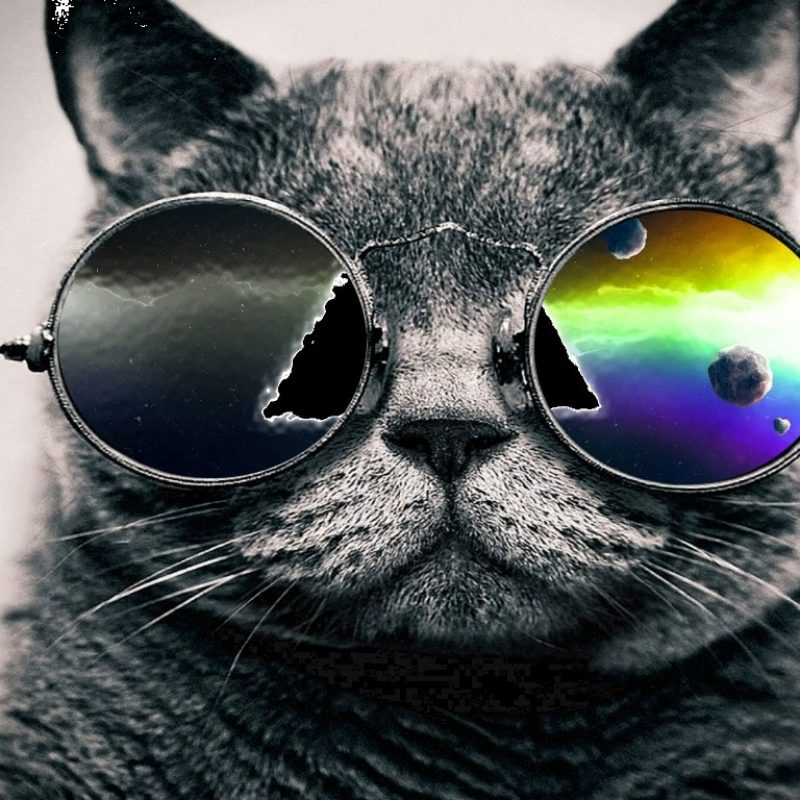 10 Top Cool Cat Wallpapers Hd Full Hd 1920 1080 For Pc Background