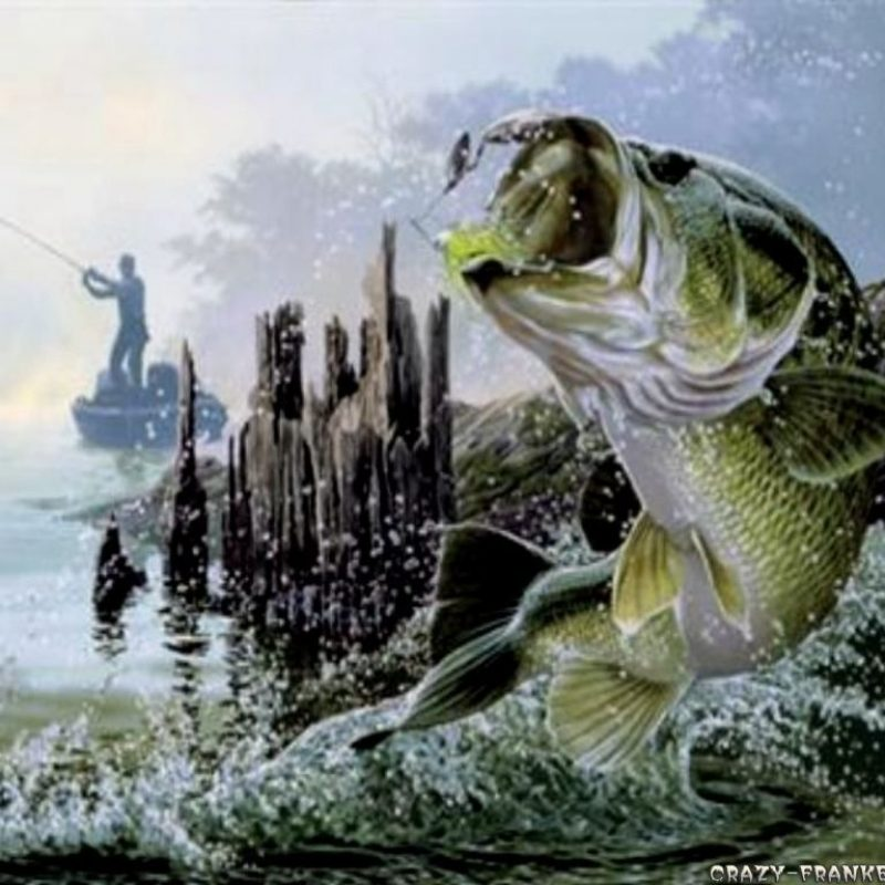 10 Best Bass Fishing Screen Saver FULL HD 1080p For PC Background 2020 free download cool fishing quotes quotesgram fishing pinterest fish 800x800