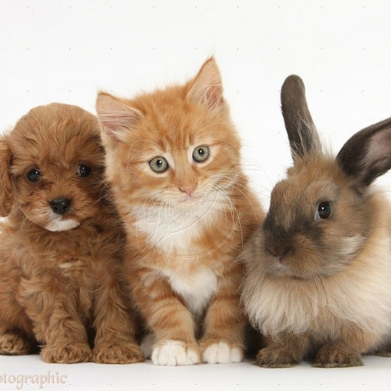 10 Most Popular Pictures Of Puppies And Kitties FULL HD 1080p For PC Background 2018 free download cool puppies and kittens and bunnies together and also cute 800x800