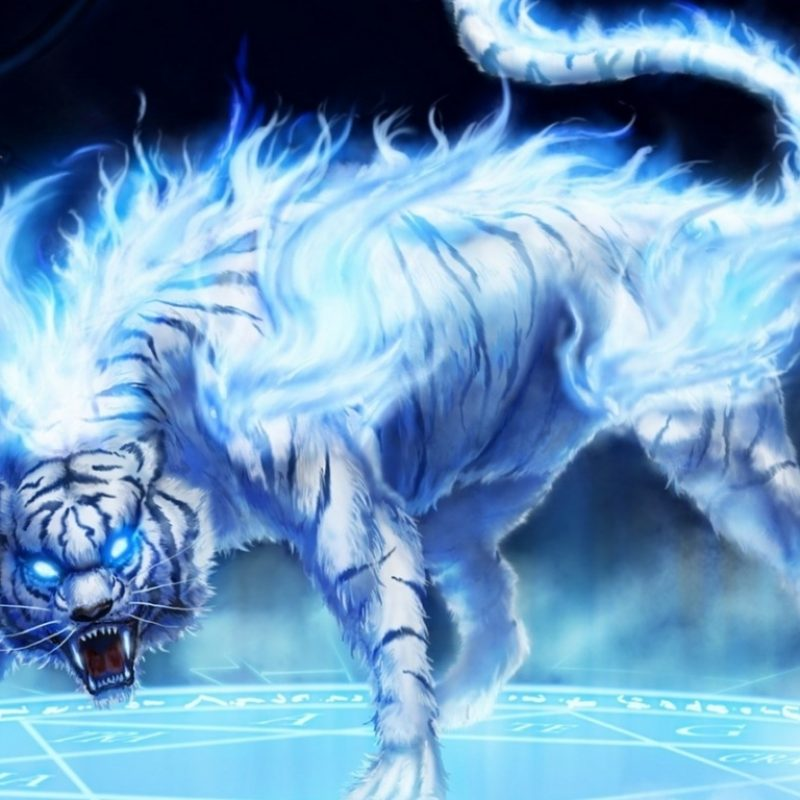 10 Latest Cool Pics Of Tigers FULL HD 1080p For PC Desktop 2020 free download cool tiger wallpaper dowload 800x800