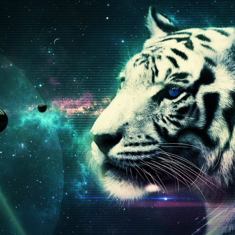 10 Latest Cool Pics Of Tigers FULL HD 1080p For PC Desktop 2020 free download cool white tiger wallpaper 25689 2560x1440 px hdwallsource 800x800