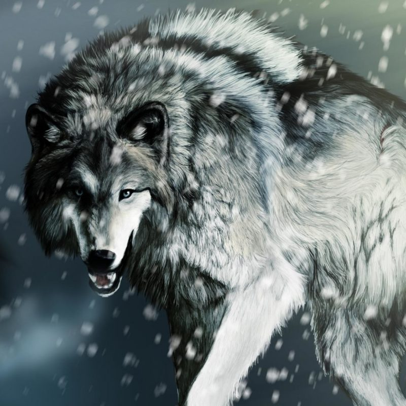10 Best Cool Wolf Wallpaper Hd FULL HD 1920×1080 For PC Background 2018 free download cool wolf wallpaper 61 images 800x800