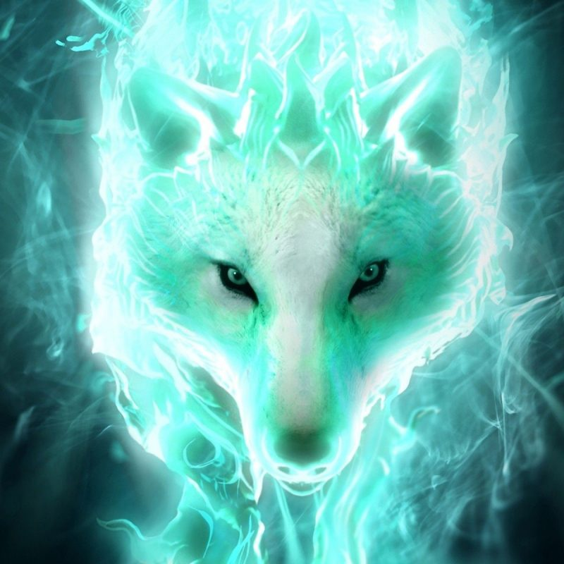 10 Most Popular Cool Pictures Of Wolfs FULL HD 1080p For PC Desktop 2018 free download cool wolf wallpapers 59 images 800x800