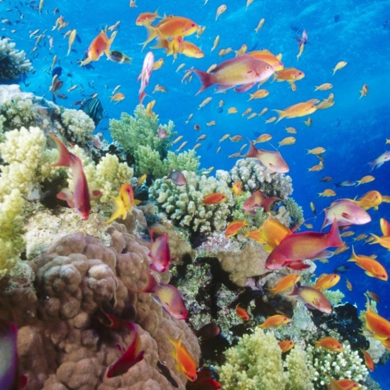 10 New Coral Reef Wallpaper Widescreen Hd FULL HD 1920×1080 For PC Background 2020 free download coral reef southern red sea near safaga egypt e29da4 4k hd desktop 800x800