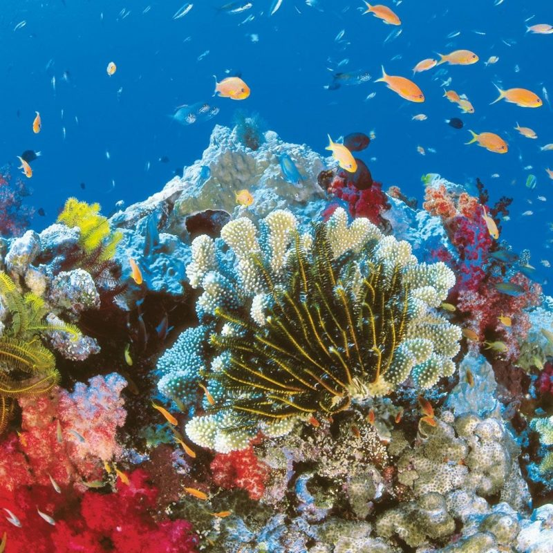10 New Coral Reef Wallpaper Widescreen Hd FULL HD 1920×1080 For PC Background 2020 free download coral reef wallpapers hd group 76 800x800