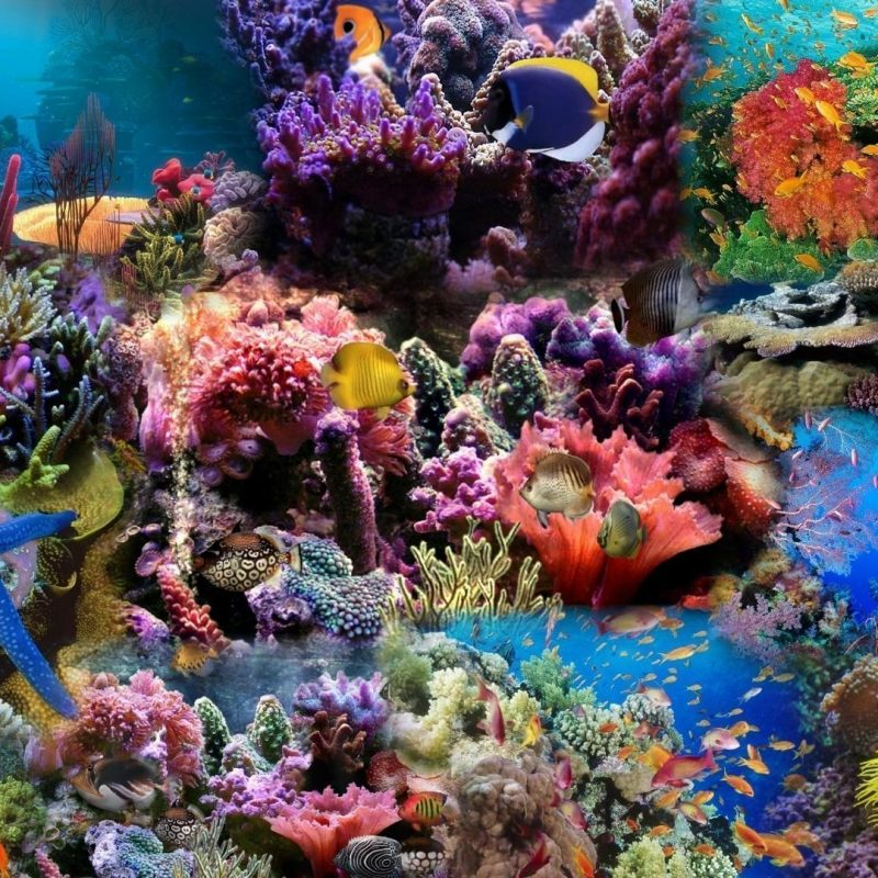 10 New Coral Reef Wallpaper Widescreen Hd FULL HD 1920×1080 For PC Background 2020 free download coral reef wallpapers wallpaper cave 800x800