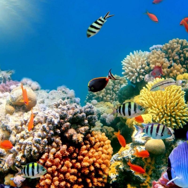 10 New Coral Reef Wallpaper Widescreen Hd FULL HD 1920×1080 For PC Background 2020 free download coral reefs wallpapers hd widescreen desktop backgrounds hd 800x800