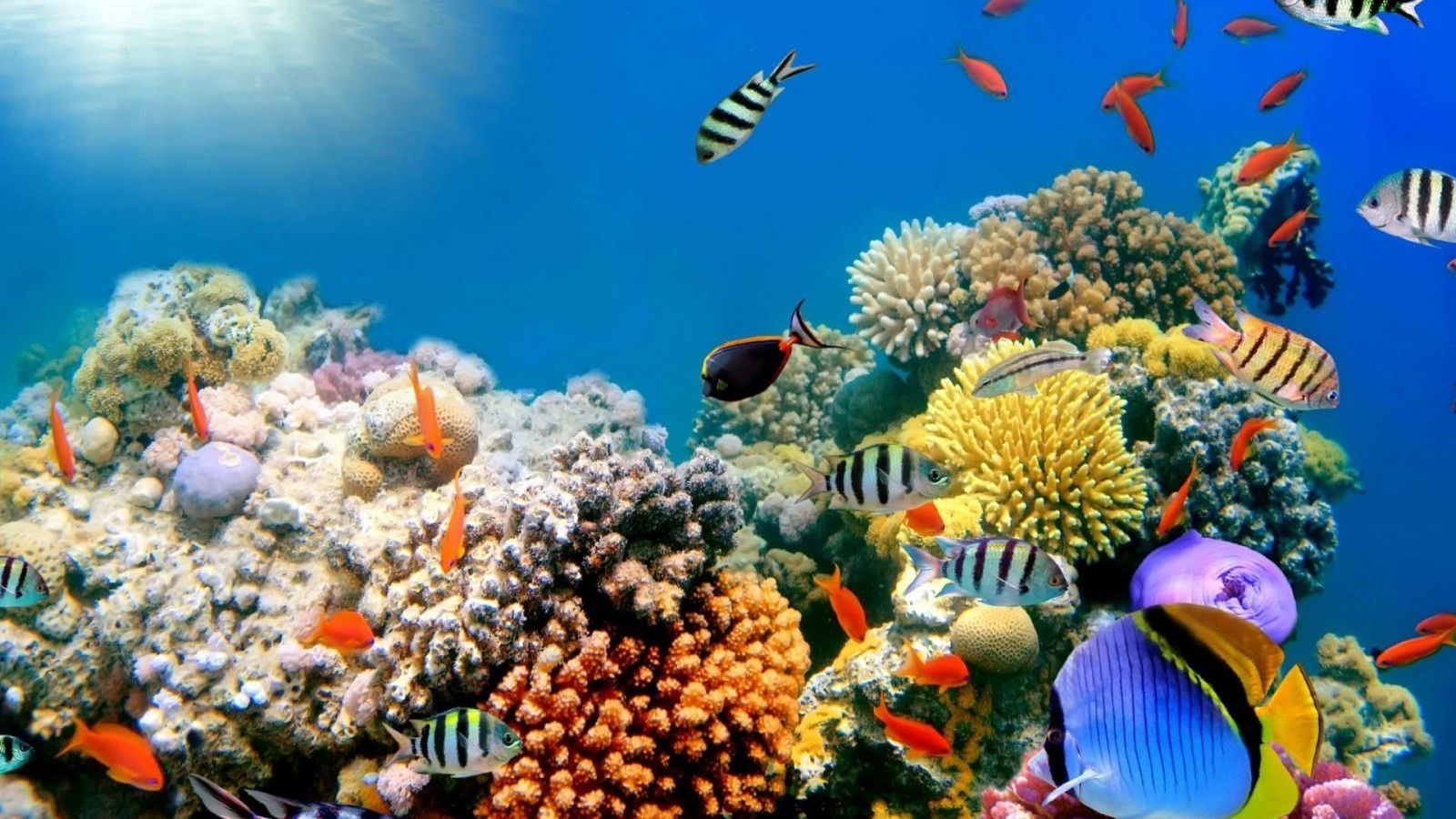 coral reefs wallpapers hd widescreen desktop backgrounds | hd