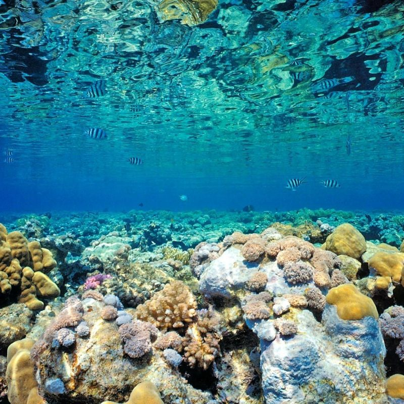 10 New Coral Reef Wallpaper Widescreen Hd FULL HD 1920×1080 For PC Background 2020 free download coralreef coral reef wallpaper hd 2 1600x1200 under the sea 800x800