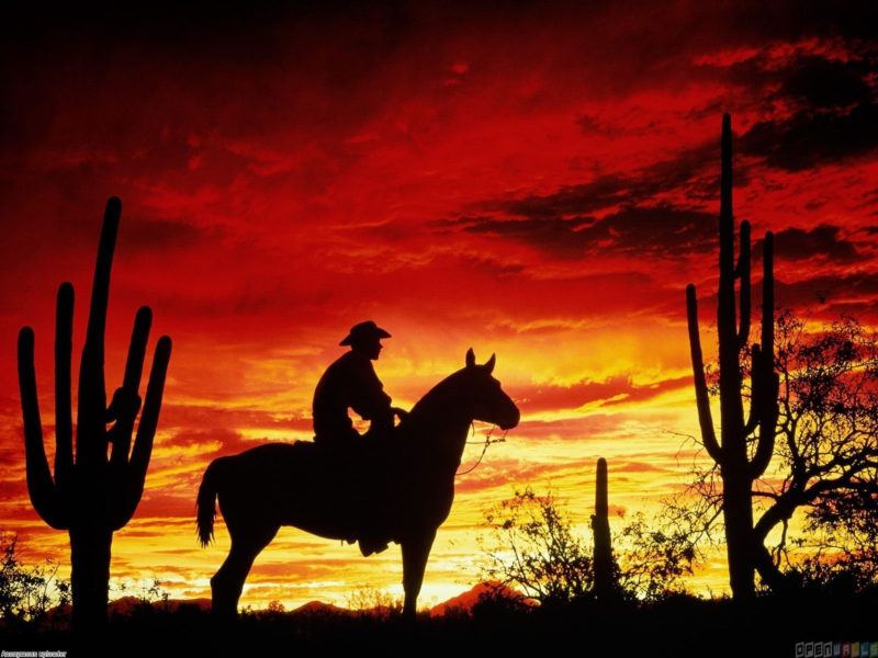 10 New Cowboy Screen Savers FULL HD 1920×1080 For PC Background 2020 free download cowboy sunset sunset cowboy wallpaper 7460 open walls 800x600