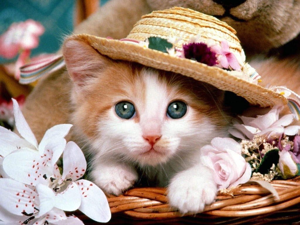 cute animal wallpaper | **animals: kitten cuties ** | pinterest