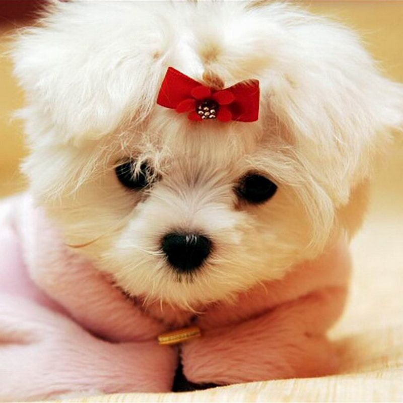 10 New Cute Baby Dogs Wallpaper FULL HD 1920×1080 For PC Desktop 2018 free download cute baby animal wallpapers wallpaper wiki 800x800