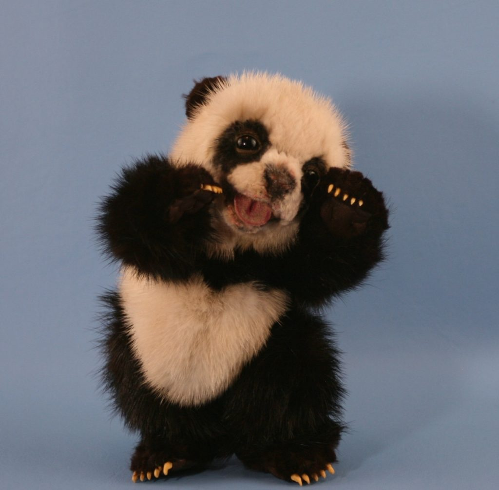 10 Best Cute Baby Panda Images FULL HD 1920×1080 For PC Background 2018 free download cute baby panda bears bing images awe too cute pinterest 1024x1006