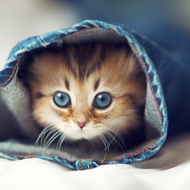 10 Most Popular Cute Cat Desktop Wallpaper FULL HD 1920×1080 For PC Desktop 2018 free download cute cat desktop wallpaper 07755 baltana 800x800