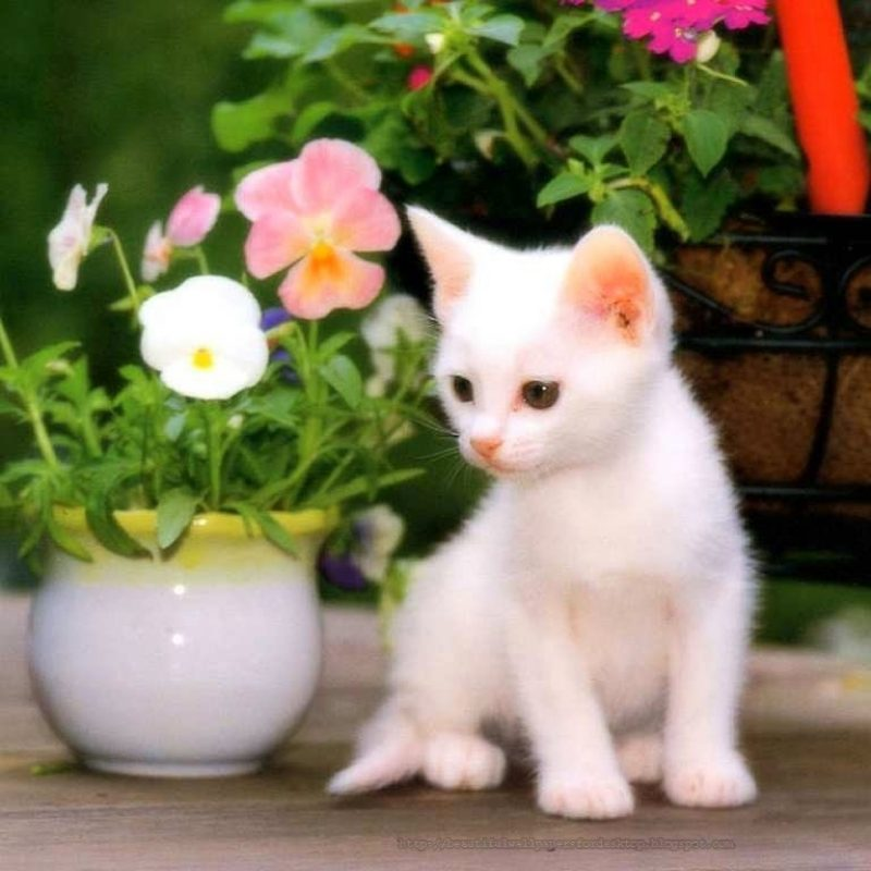 10 Top Cat Wallpapers Free Download FULL HD 1920×1080 For PC Desktop 2018 free download cute cat wallpapers free download collection 72 800x800